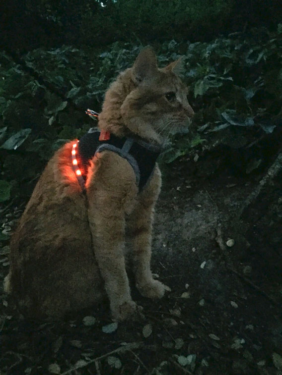 LED-Cat-Harness